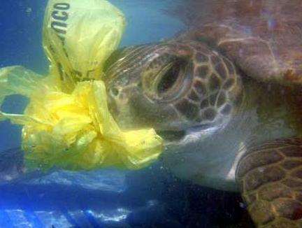 basura ante el mar